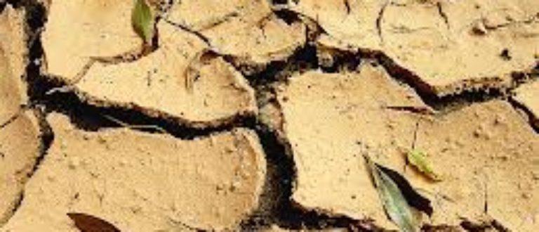 Article : La sécheresse frappe le Nord-Est du Brésil
