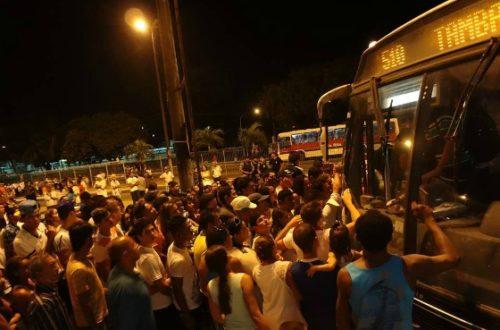 Article : Au Brésil, les animaux aussi prennent le bus